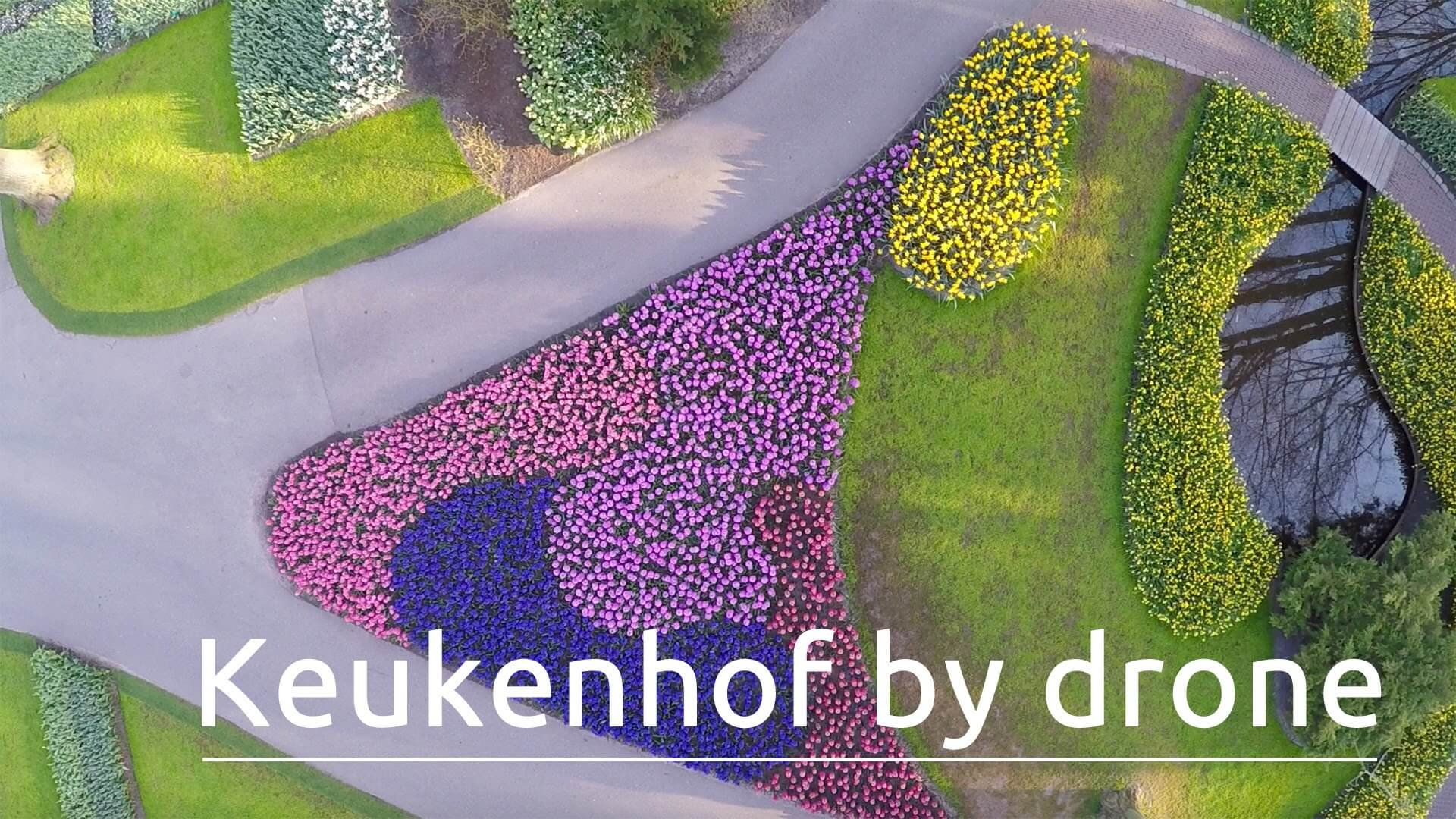 Video Amazing Views Of World S Largest Flower Garden From Drone